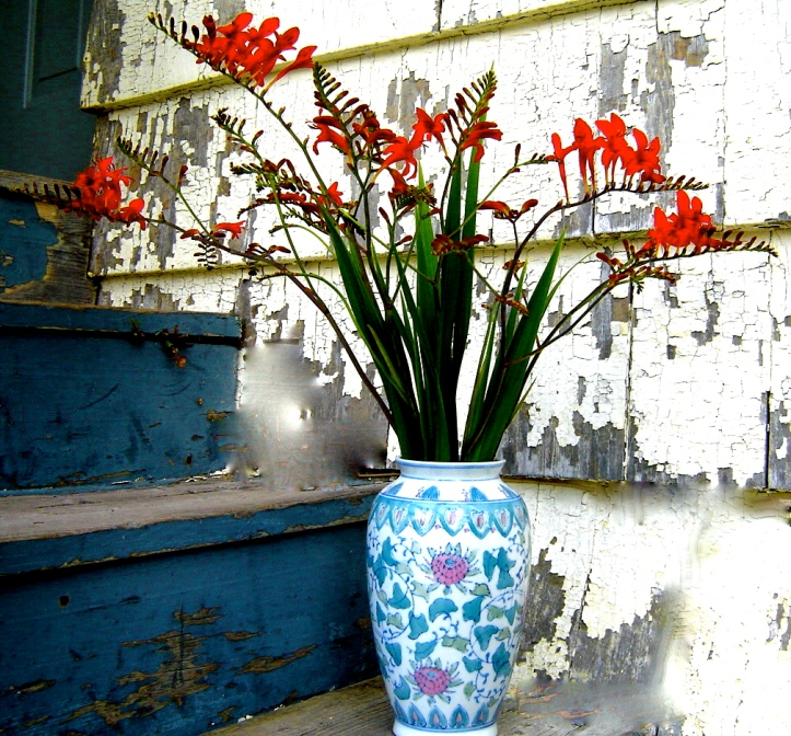 Crocosmia on the back steps of the Oakdene.