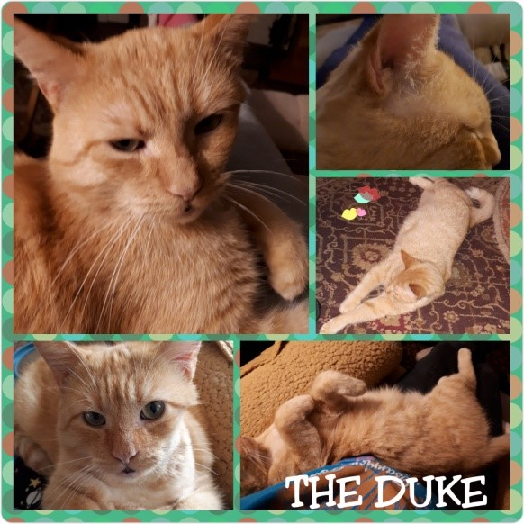 The-Duke-Collage